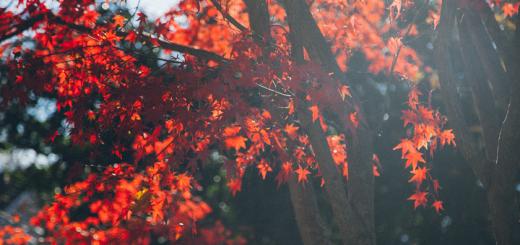 efterår farver blade