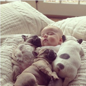 puppies-cuddling-with-baby