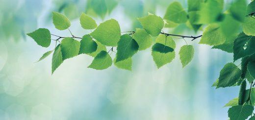 Taknemmelighed, for grønne blade