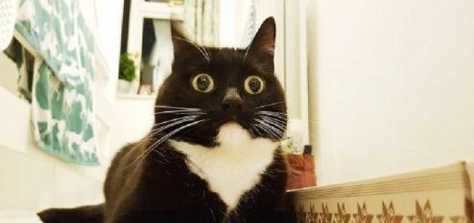 Chokeret kat. Foredrag