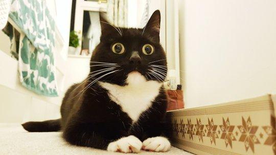 chokeret kat. foredrag om livet efter fast arbejde